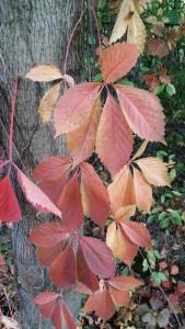 jesień w Czasławiu