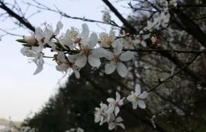 wiosna w czasławiu
